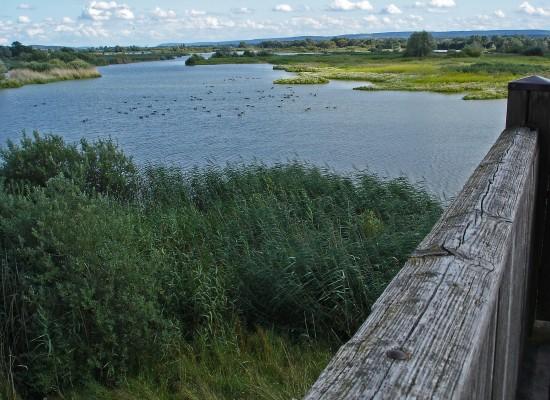 Vogelinsel am Altmühlsee - Fränkische Seenplatte